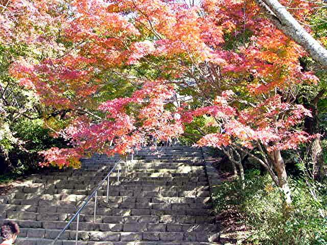 宝満宮 竃門神社_a0042310_1444326.jpg