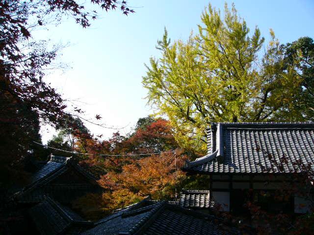 宝満宮 竃門神社_a0042310_144542100.jpg