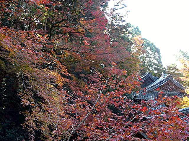 宝満宮 竃門神社_a0042310_14465518.jpg