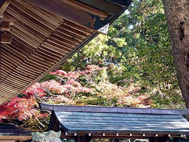 宝満宮 竃門神社_a0042310_14491098.jpg