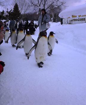 ペンギンのお散歩_b0019313_1571851.jpg