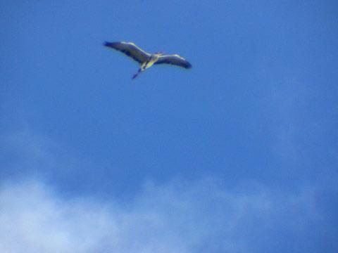 まだまだ続くよ、トリノ(鳥の)オリンピック。_e0084756_16484373.jpg