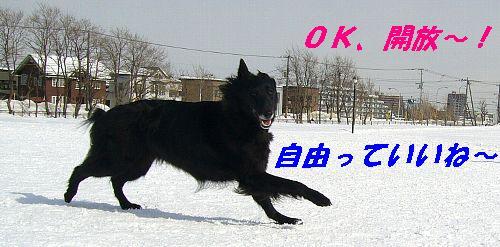 c0043500_147635.jpg