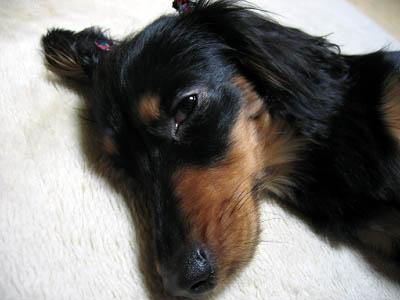 アカン!ドッと疲れて眠た~なってきた~