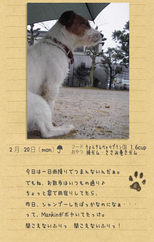 b0040323_0534977.jpg