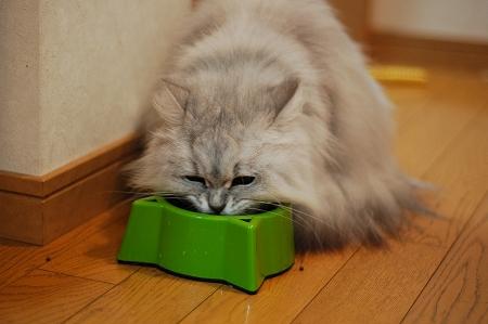 猫の日のお祝い_a0020021_2237151.jpg
