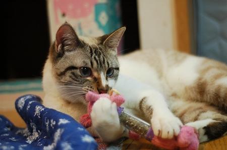 猫の日のお祝い_a0020021_22382154.jpg