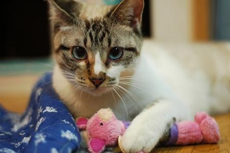 猫の日のお祝い_a0020021_22383125.jpg