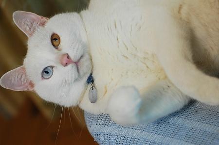 猫の日のお祝い_a0020021_223918100.jpg