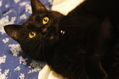 猫の日のお祝い_a0020021_22394144.jpg