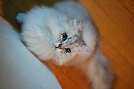 猫の日のお祝い_a0020021_22421368.jpg