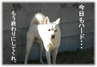 a0047325_1911721.jpg