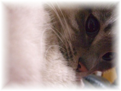 ミルクの呟き。。猫の日特別寄稿_c0006826_6362511.jpg