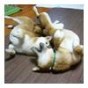 わんムービー/2006.2.22_b0057675_1019447.jpg
