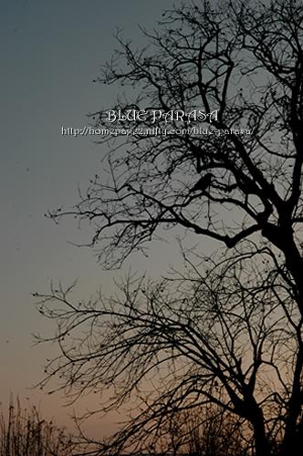 d0040908_20111215.jpg