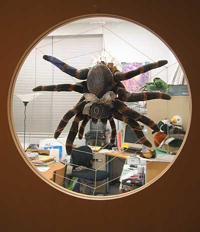 ミノリ研究室のドア窓に・・・_a0026507_1216334.jpg