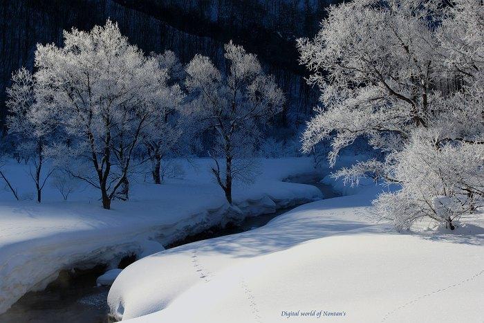 厳冬の華_c0065410_1322386.jpg