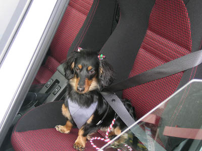 シートベルトはちゃんとしましょう