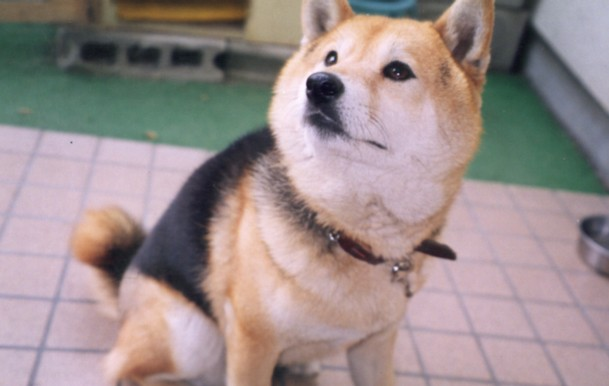 コロちゃん_c0070377_2303293.jpg