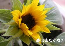 b0032694_10475498.jpg