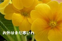 b0032694_1048776.jpg
