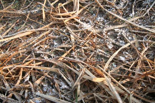 芝置屋根の雪がなくなる_e0054299_13294525.jpg