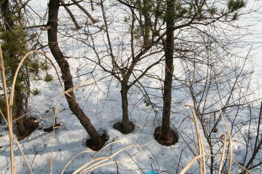芝置屋根の雪がなくなる_e0054299_13311061.jpg