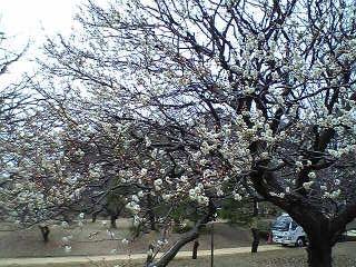 春ですな。_d0003502_23112020.jpg