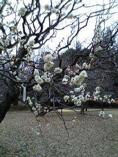 春ですな。_d0003502_239448.jpg