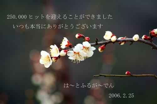 e0086212_204128.jpg