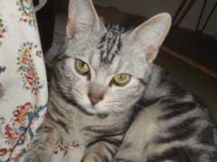 猫のき◯たまを取る話」_b0054727_10234514.jpg