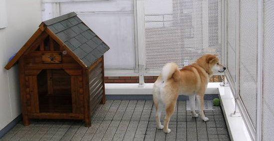 2006年2月26日愛ちゃんのイヌバウワン_f0060461_13181742.jpg