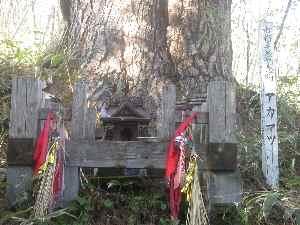遠野不思議 第三十三話「赤松(山神の地)」_f0075075_200351.jpg