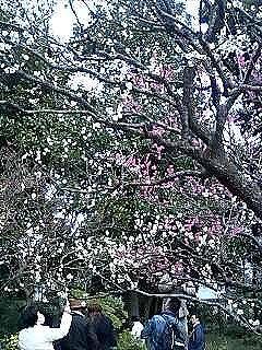 梅を見てまいりました。_e0076995_1315466.jpg