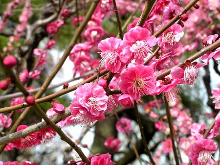 熊本 水前寺公園_e0048413_2382757.jpg