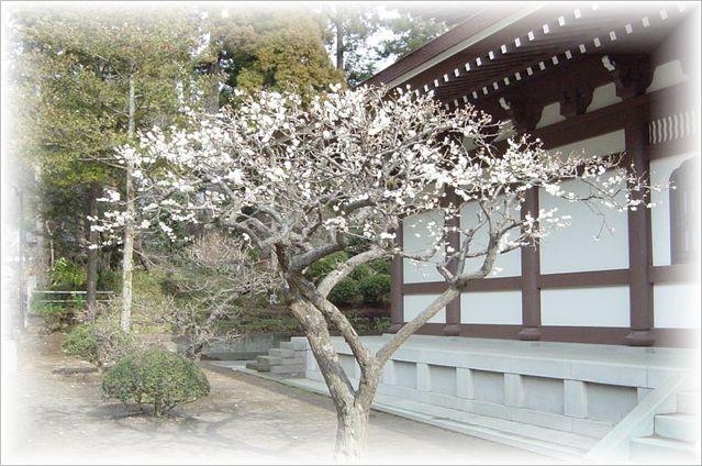 北鎌倉散策_a0037389_1052634.jpg