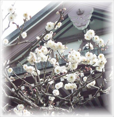 北鎌倉散策_a0037389_1075127.jpg