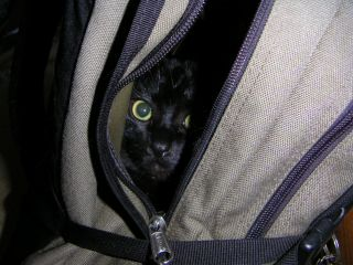 cat in a backpack_c0025115_20584069.jpg