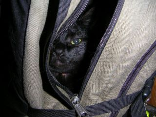 cat in a backpack_c0025115_2122063.jpg