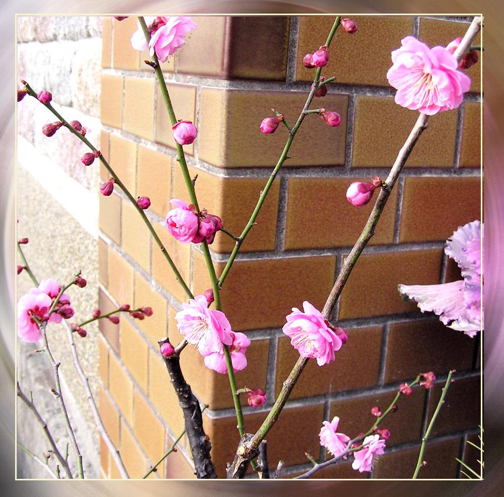 気品漂う日本の春_f0045132_122267.jpg
