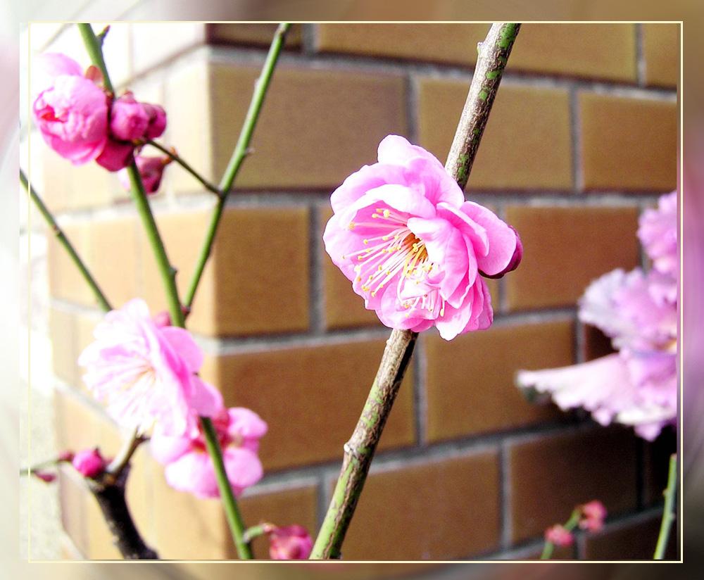 気品漂う日本の春_f0045132_1233526.jpg