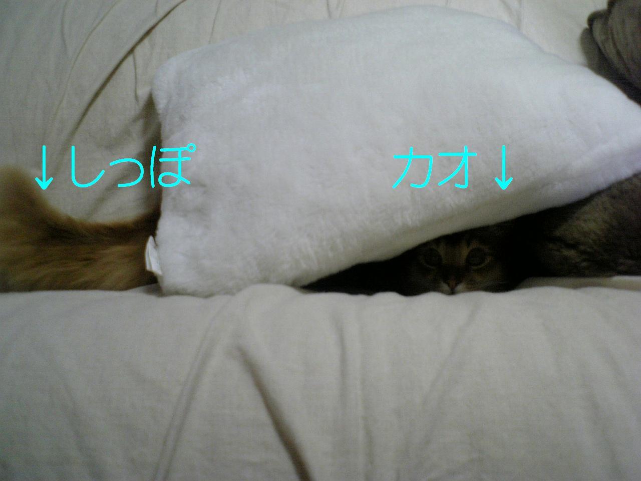 f0060373_1864927.jpg