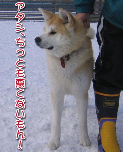 ひなたちゃんと桃_a0044521_011030.jpg