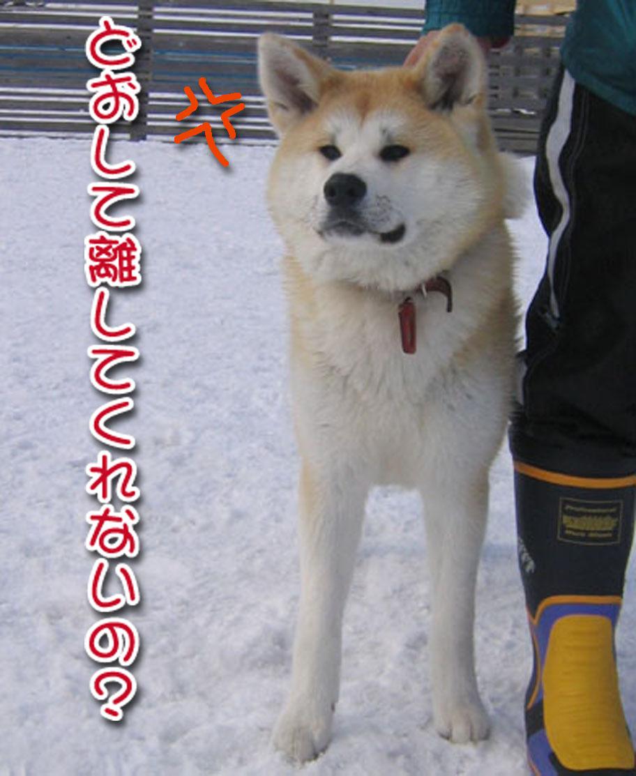ひなたちゃんと桃_a0044521_01262.jpg