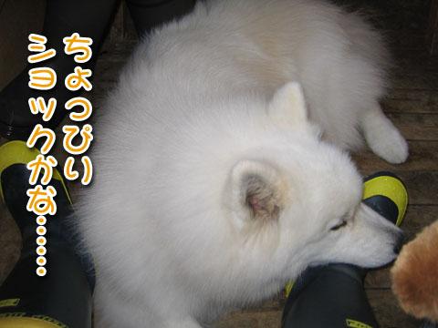 ひなたちゃんと桃_a0044521_0153855.jpg