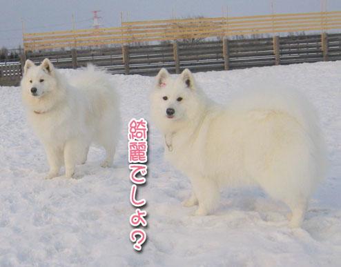ひなたちゃんと桃_a0044521_0172272.jpg