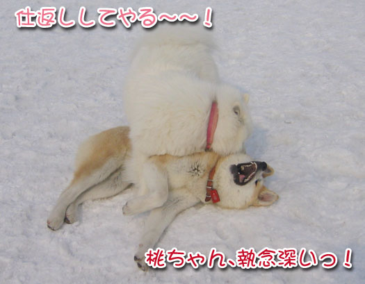 ひなたちゃんと桃_a0044521_042072.jpg