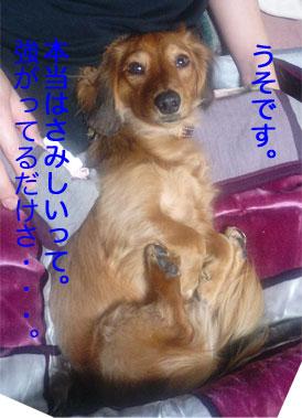 d0035482_14201867.jpg