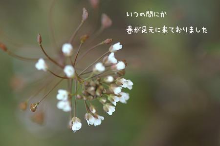 f0080530_1952118.jpg