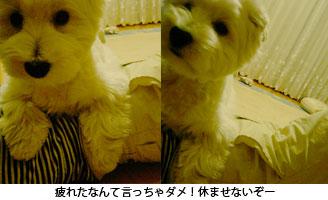 e0077142_011382.jpg